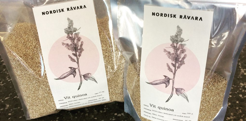 Svensk quinoa odlad i Skåne