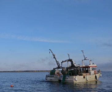 Junköfiskarna trålar kalix löjrom