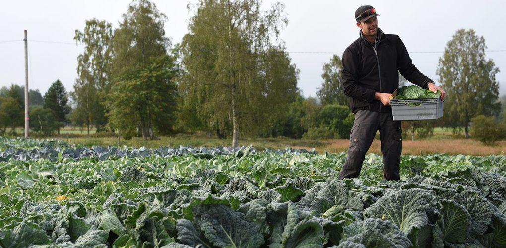 Filmen om Wålstedts Lantbruk