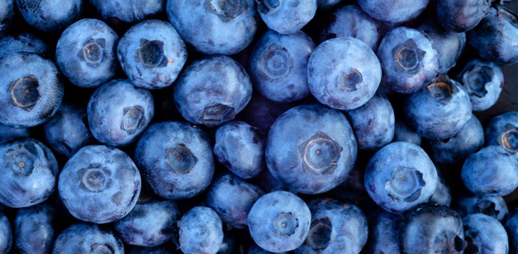 Örtagård Öst och Värmdö Musteri levererar blåbär när Sigtuna Brygghus brygger öl på Englands äldsta bryggeri